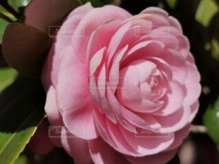 花のクローズアップの写真・画像素材[4255723]