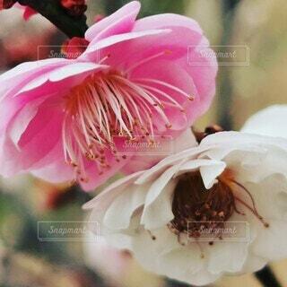 花のクローズアップの写真・画像素材[4258301]