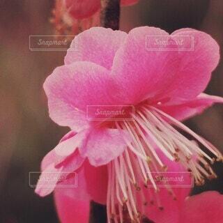 花のクローズアップの写真・画像素材[4258303]