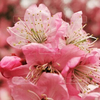 植物の上のピンクの花のクローズアップの写真・画像素材[4260457]