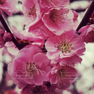 花のクローズアップの写真・画像素材[4260461]