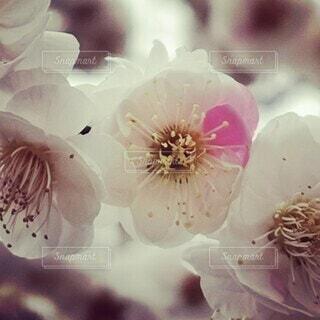 花のクローズアップの写真・画像素材[4260459]