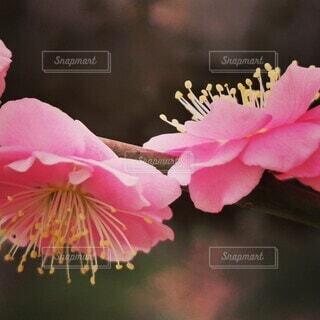 花のクローズアップの写真・画像素材[4260462]