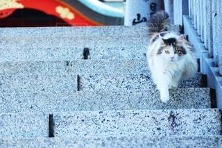 お散歩中に出会った猫の写真・画像素材[3363355]