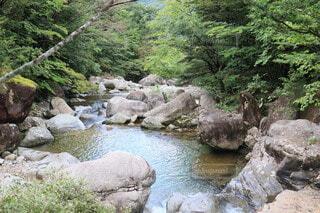 岩の側に木がある岩の川の写真・画像素材[3650222]