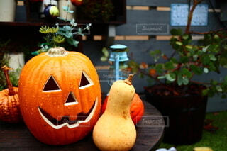 雨に濡れたハロウィンのジャックオランタンの写真・画像素材[3776414]