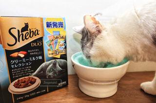 極上シーバタイム シーバDUO クリーミーミルク味の写真・画像素材[4236854]