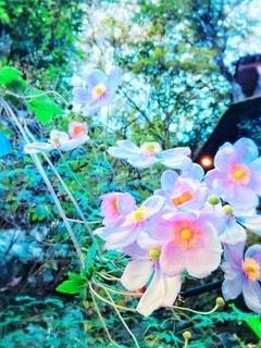 川沿いで綺麗な花に遭遇♡の写真・画像素材[3345911]