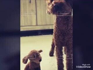 犬,動物,屋内,茶色,仲良し,ぬいぐるみ,愛犬,友達,なあに,あのね
