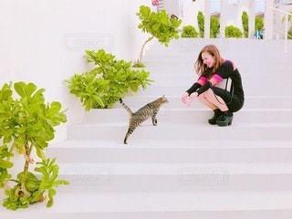 猫とのふれあいの写真・画像素材[3291819]