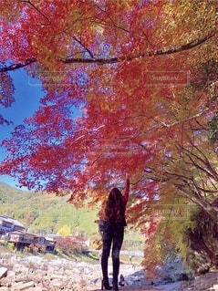 木の隣に立っている人の写真・画像素材[3898493]