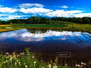 緑の草と木々に囲まれた大きな水域の写真・画像素材[3284632]