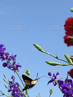 蜜食べにきた虫の写真・画像素材[3326149]