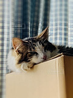カメラを見ている猫の写真・画像素材[3344152]