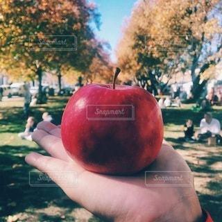 リンゴを持つ手の写真・画像素材[3297906]