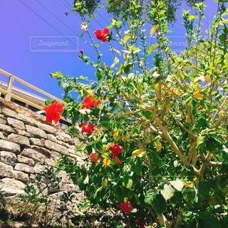 花園のクローズアップの写真・画像素材[3297909]
