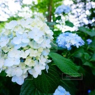 花のクローズアップの写真・画像素材[3298278]