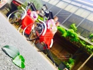花のクローズアップの写真・画像素材[3298288]