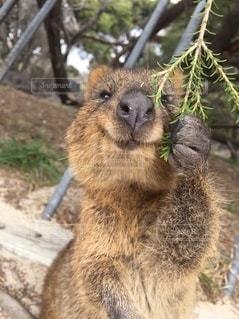 動物のクローズアップの写真・画像素材[3298291]