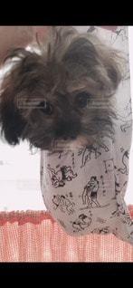 バックin犬の写真・画像素材[3422093]