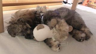 人形を抱えて眠るの写真・画像素材[3422095]
