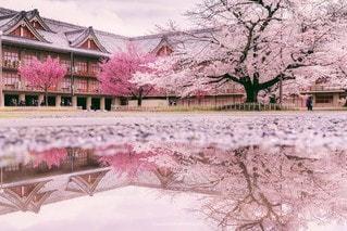 水溜りに映る桜と館の写真・画像素材[3292202]