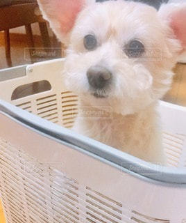 箱入り娘♡の写真・画像素材[3295743]