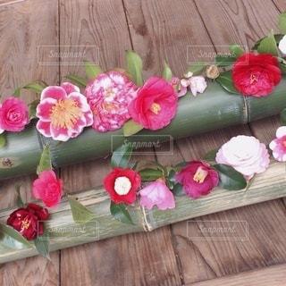 霊鑑寺、春の特別公開の写真・画像素材[3387469]