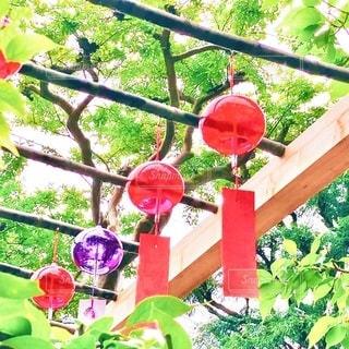 正寿院の風鈴まつりの写真・画像素材[3440711]