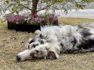 庭でお昼寝の写真・画像素材[3314298]