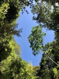 森から覗く青空の写真・画像素材[3338286]