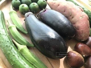 採れたて野菜⑯の写真・画像素材[3732651]