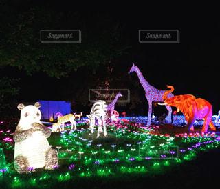 ハウステンボス光の動物園の写真・画像素材[858213]