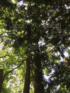 森林の写真・画像素材[170182]