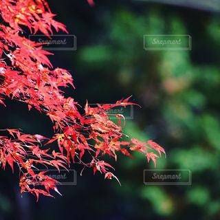 植物のぼやけた写真 - No.878335