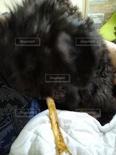 犬,バナナ