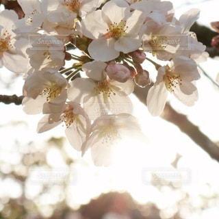 春のやわらかな光の中での写真・画像素材[3300473]