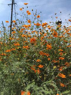 オレンジ色の花の写真・画像素材[3307179]