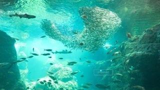 水中のアンサンブルの写真・画像素材[3373906]