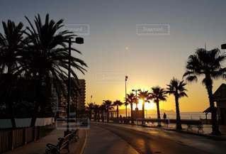 ヤシの木が並ぶ街道に昇る朝日の写真・画像素材[3325756]