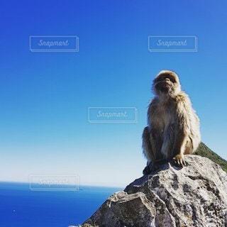 岩の上に座っている猿の写真・画像素材[3325753]