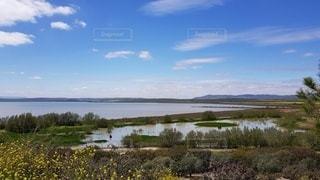 フラミンゴが繁殖する湿地帯の写真・画像素材[3328399]