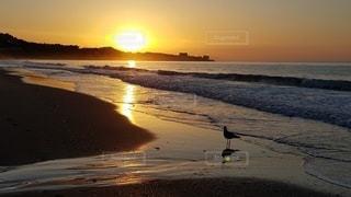 夕日に佇むの写真・画像素材[3400738]