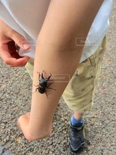 腕にいるクワガタを捕まえようとしている子供の写真・画像素材[3302423]
