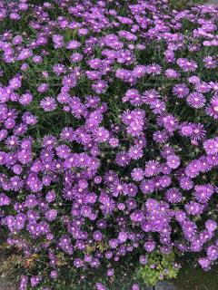 道端にある小さなお庭の写真・画像素材[3305258]