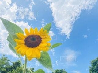 向日葵の下での写真・画像素材[4676769]