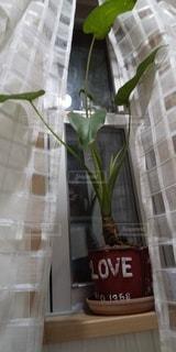 観葉植物と窓の写真・画像素材[3328695]