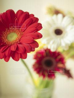 花のクローズアップの写真・画像素材[3309915]