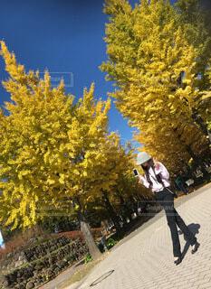 福島あづま運動公園のイチョウ並木と女の人❣️の写真・画像素材[3896824]