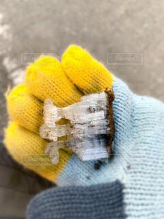 霜柱の写真・画像素材[4057212]